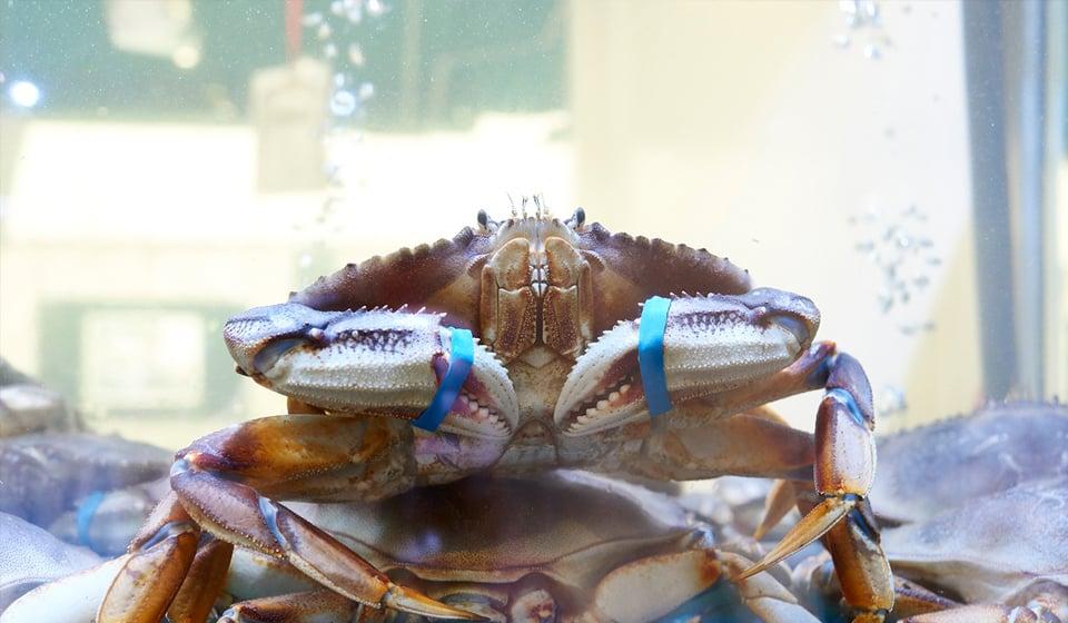 泗和行超市螃蟹